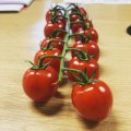 Came in to the office to be greeted by these little beauties from britishtomatoes Thank you so much BTGA.